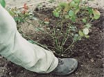 Planting advice 3